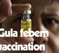 gula-febern-vaccination